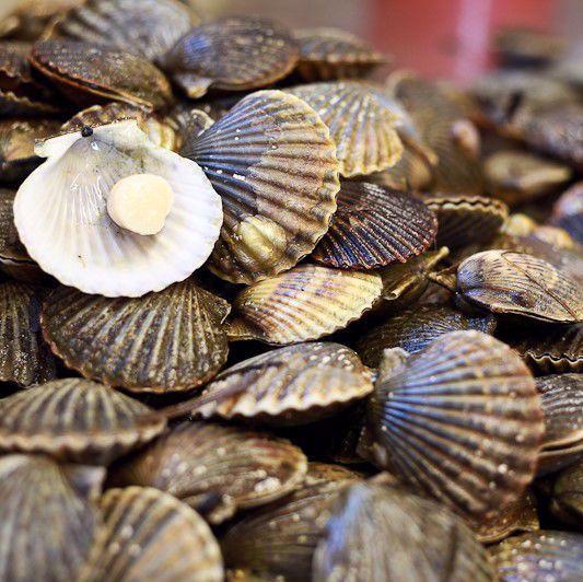 0000765_sea-scallops-hudson-bay-u-10-wild-caught-per-2